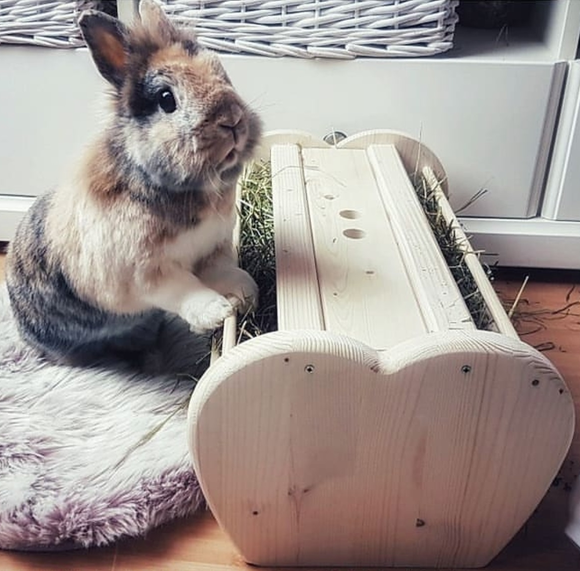 hay rack for guinea pig and rabbit Heuraufe